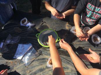 Voluntarios realizando tratamiento a los frutos recogidos.