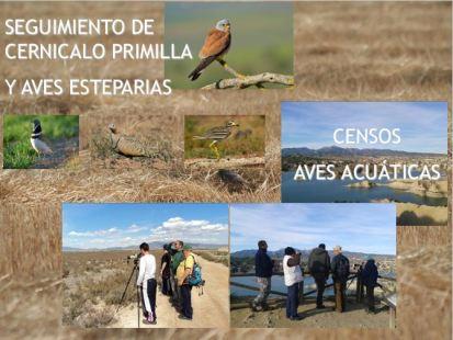 censo aves